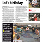 anglers mail giant freshwater stingray gives birth