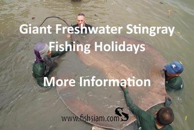 giant freshwater stingray fishing holidays