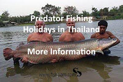 predator fishing holidays in thailand