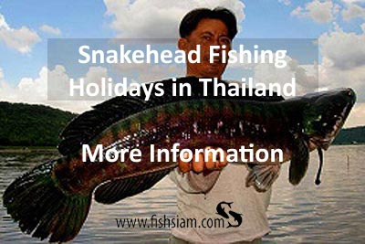 snakehead fishing holidays in thailand