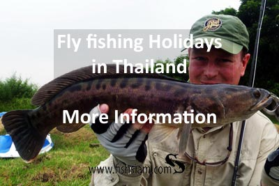 fly fishing holidays in thailand