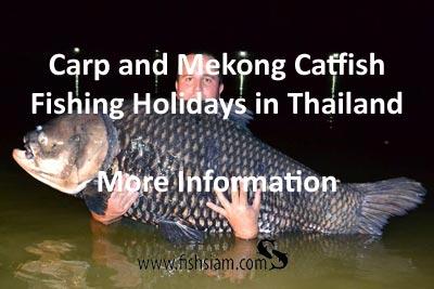 Carp and Mekong Catfish Fishing holidays in thailand