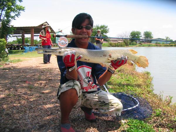 Alligator Gar caught from IT Monster predator lake in Ratchaburi