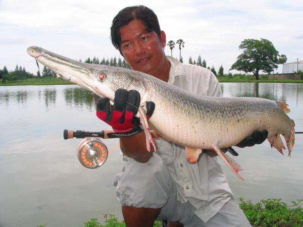 Arapaima gigas IT Monster predator lake in Ratchaburi by Anglers Mail's Ian Welch