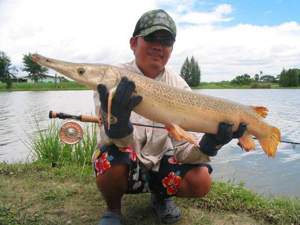 Alligator Gar caught on the fly from IT monster Lake by Boy.