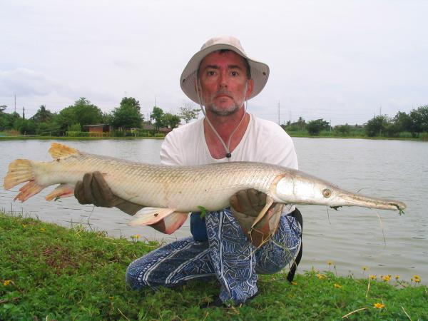 Alligator Gar caught from IT Monster Predator Lake in Ratchaburi by Francois Pineau