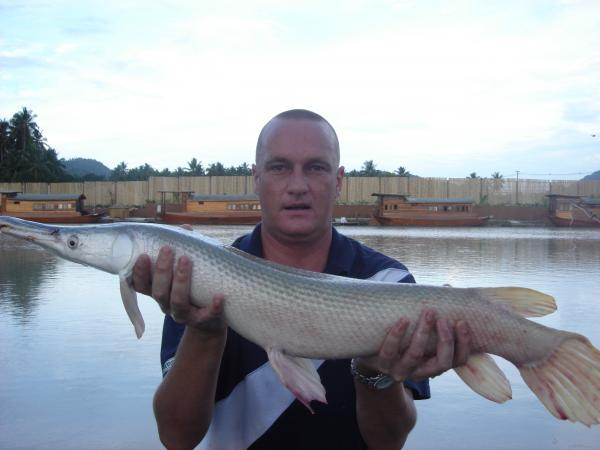 Alligator Gar caught from Topcats fishery in Southern Thailand.