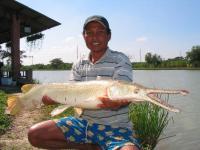Alligator Gar caught from IT Monster Predator Lake in Ratchaburi.