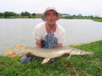 Alligator Gar caught from IT Monster Predator Lake in Ratchaburi by Francois Pineau.