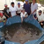 zeb hogan world record stingray maeklong river