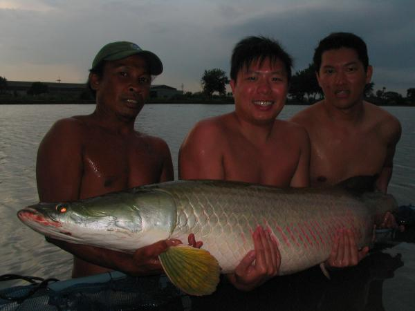 Arapaima gigas caught from IT Monster Predator Lake in Ratchaburi
