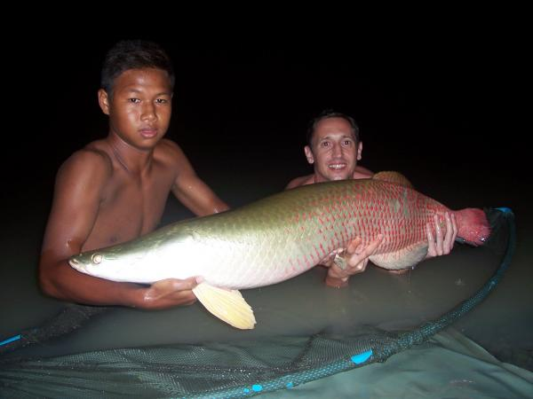 Arapaima gigas caught from Topcats fishery in Koh Samui in Southern Thailand.