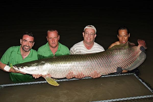 Massive Arapaima gigas caught from IT Monster Predator Lake in Ratchaburi by Dr.Ian Welch.