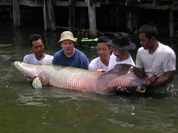 Arapaima gigas caught Francois Pineau estimated 160kg+  Bungsamlan Lake Bangkok.