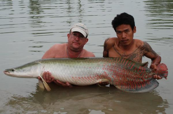 Arapaima gigas caught from IT Monster Predator Lake in Ratchaburi.