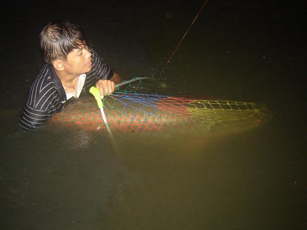 Nighttime Arapaima gigas from Bungsamlan Lake Bangkok estimated 100kg