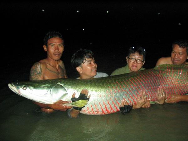 Massive 140kg Arapaima caught from IT Lake Monsters.