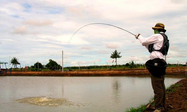 Fly fishing for Barramundi at the Barramundi ponds in Chachoengsao