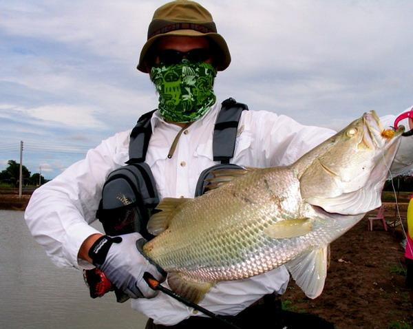 Big Barramundi caught on fly from the Barramundi ponds in Chachoengsao by Eric Tan