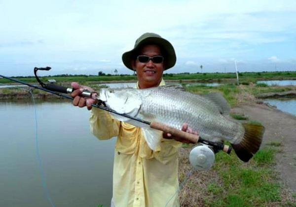 7kg Barramundi caught from Chachoengsao near Bangkok.