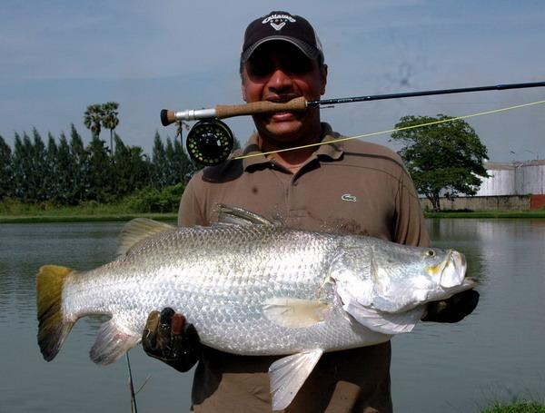 Big Barramundi caught whilst fly fishing at IT Lake Monster.