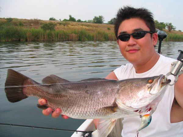 Lure caught Barramundi caught from Fishing World Lake in Minburi.