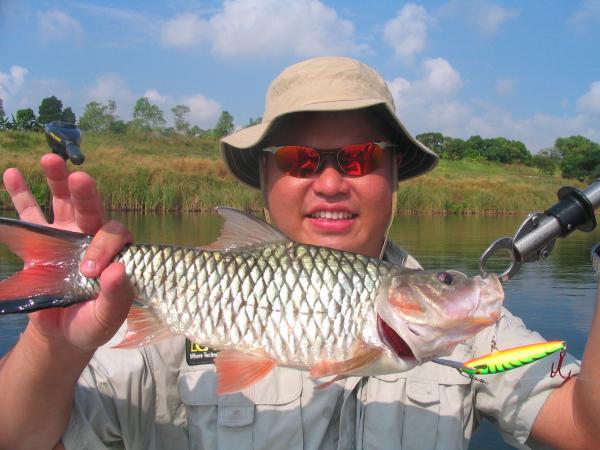 Hampala barb caught from Fishing world lake in Minburi.