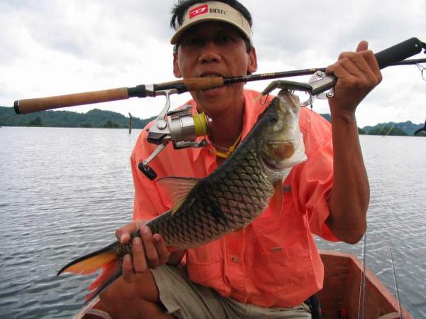 Lure caught Hampala barb from Khao Laem Dam in Kanchanaburi