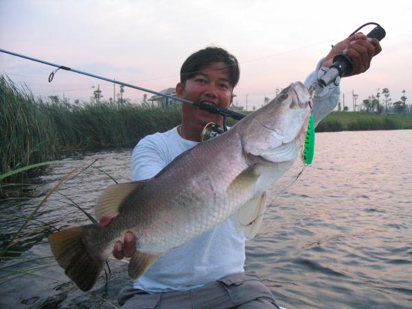 Barramundi 7kg+ caught from Fishing Lake in Ratchaburi