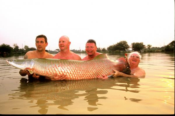 Estimated 100kg+ Arapaima gigas caught from IT Monster predator Lake in Ratchaburi