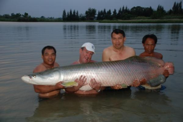 Large Arapaima gigas captured by Brendan from IT Monster predator lake in Ratchaburi
