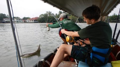 Freshwater Stingray Fishing in Thailand