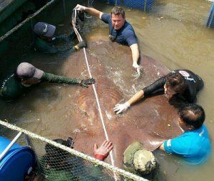 maeklong river stingray fishing holidays