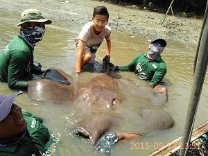 Maeklong River Stingray fishing Thailand 2015