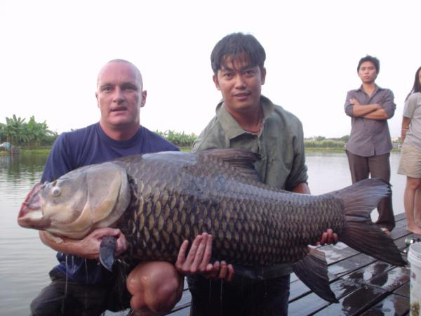 Giant siamese carp caught from Bungsamlan Lake Bangkok 60kg+.