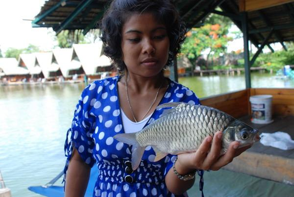 Java Barb caught from Bungsamlan Lake in Bangkok