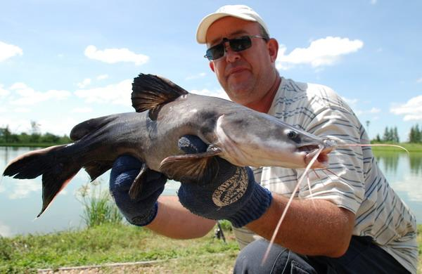 Crystal Eyed Catfish caught by Brendan from IT Monster Predator Lake Ratchaburi.