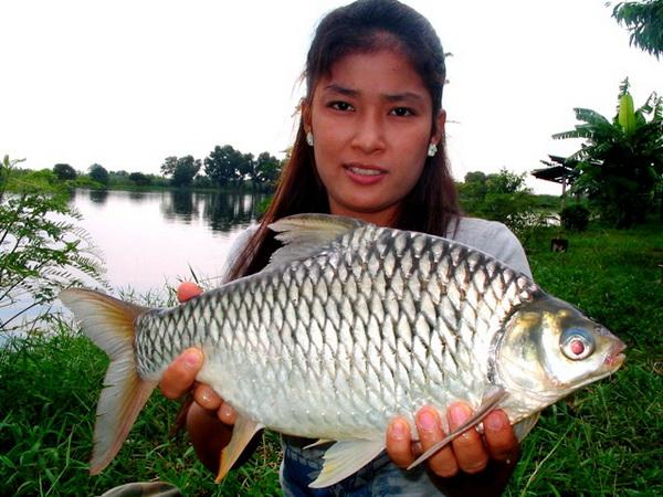 Good size Java Barb caught from new lake near Bangkok by Jum