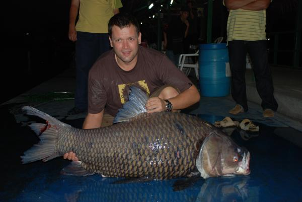 Giant Siamese carp caught by Louis 50kg.