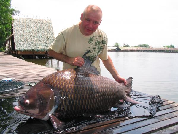 Giant Siamese carp caught from Bungsamlan Lake in Bangkok 56kg.