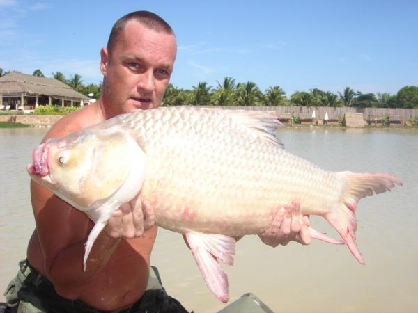 Giant Siamese carp caught from Topcats fishery in Southern Thailand