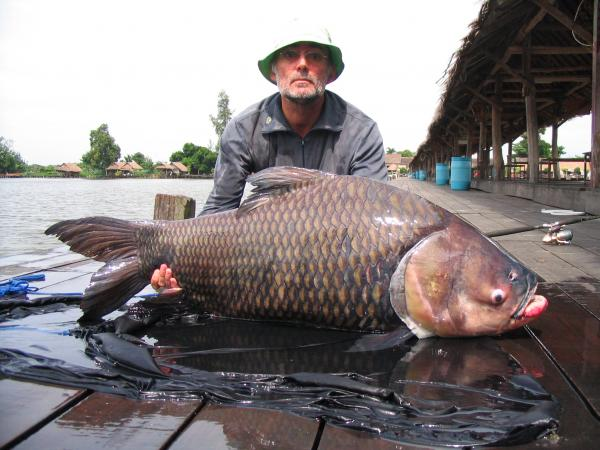 Giant siamese carp caught by Francois Pineau 50kg+.