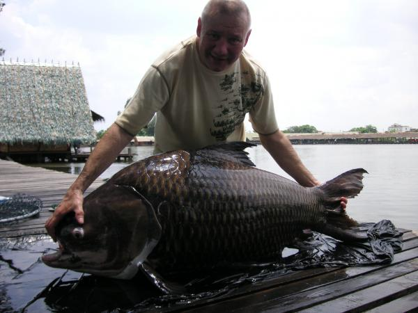 Giant siamese carp caught from Bungsamlan Lake Bangkok 56kg.