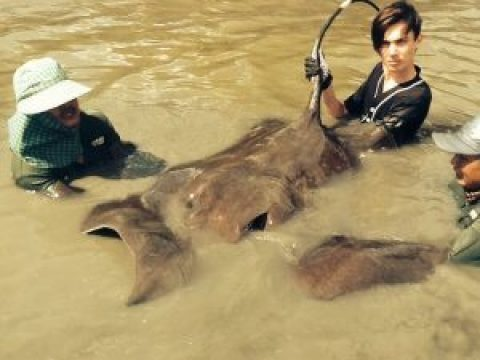 Stingray fishing Mae klong River Day 2