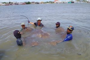 monster fishing maeklong river
