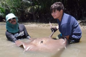 German angler lands Giant freshwater stingray Maeklong River