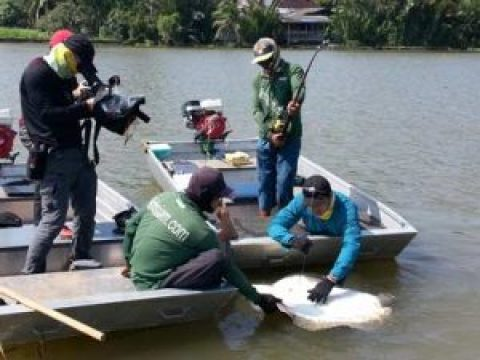 GMA TV stingray show Mae Klong river Thailand