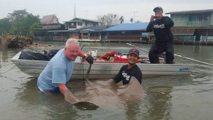 Giant Freshwater Stingrays