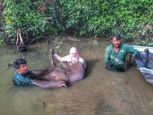 Dutch Angler Fishing at Maeklong River - Day 3