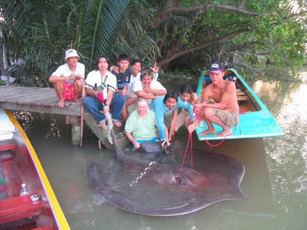 Giant freshwater stingray caught by Tom Parker estimated 180-200kg from the Ban Pakong River.